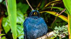 Mr. Blue Bird (benjamin.t.kemp) Tags: bluebird nature