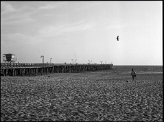 Flight (greenschist) Tags: california usa porthueneme zenzanonrf100mmf45 pier birds blackwhite bronicarf645 pacifcocean berggerpancro400 analog film