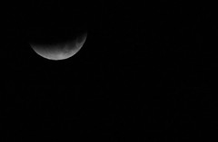 Blue Bloody Moon Eclipse January 31st 2018 (1) (komissarov_a) Tags: moon full supermoon sky night blue bloody lunar total eclipse lifetime celebrate chance komissarova streetphotography rgb canon m3 5d beautiful event astronomy fantastic pink fantaboulous background texas луна лунное затмение полная полнолуние зрелище кровавая суперлуние ночь небо january31st2018 лунноезатмение 31января