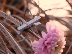 F A S T E N E R - H M M (Vivi Black) Tags: soft light macro flower fastener macromondays