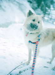 white world (Kenji Kitae) Tags: white snow dog daily snap life lifestyle lifework location nature animal earth