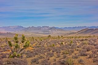 Mojave Preserve  7365 B