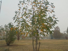 1008 (en-ri) Tags: albero tree verde giallo foglie leaves sony sonysti cielo sky autunno fall autumn