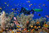 Diver by a coral reef with Anthias fishes, Red Sea, Egypt (omarelshafei95) Tags: community scubadiving sealife environement fragility egypt
