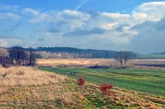 (ErrorByPixel) Tags: lowersilesia poland bogatynia grass field sky clouds nature trees forest smc pentaxda l 1855mm f3556 al smcpentaxdal1855mmf3556al pentax k5 pentaxk5 errorbypixel landscape fieldscape tree pentaxart