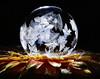 Floral Frost (Don Komarechka) Tags: ice crystal frost freezing frozen soapbubble bubble fractal winter macro gx9 leica45mm water flower gerbera backlit