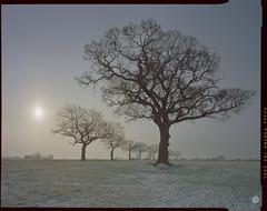 the beast from the east (steve-jack) Tags: sinar p 90mm kodak portra 160 film lf large format 4x5 5x4 tetenal c41 kit epson v500 hertfordshire buntingford herts tree winter