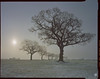 the beast from the east (steve-jack) Tags: sinar p 90mm kodak portra 160 film lf large format 4x5 5x4 tetenal c41 kit epson v500 hertfordshire buntingford herts tree winter