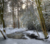 Frozen (bantamtastic) Tags: pinewoods ice pond water harrogate beastfromtheeast northyorkshire
