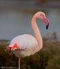 So beautiful (Jokermanssx) Tags: stagno di santa gilla capoterra cagliari sardegna flamingo fenicotteri