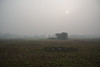 Fading into the mist (sanat_das) Tags: kolkata madurdaha field menwalkingaway sun misty haze januarymorning landscape fadingintothemist d800 28300mm