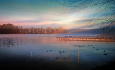 birds (augustynbatko) Tags: birds lake water nature landscape view pier sky clouds trees thickets mist sunset duck