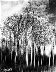 Elizabeth Morton Bird Sanctuary... (angelakanner) Tags: canonsx50 elizabeth morton bird sanctuary longisland trees bw