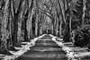 Allee (efgepe) Tags: 2018 lightroom mã¤rz neuss allee bw sw schwarzweiss schwarzundweiss märz weg silverefexpro pentaxk1 pentax 200mm blackwhite schnee snow