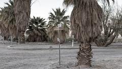Boulevard of Dreams (joeqc) Tags: zzyzx ca canon california 6d ef24105f4l springer