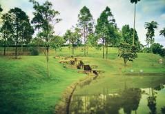 Alam Damai Recreational Park - Linkungan Damai, Alam Damai - http://4sq.com/af6t6r #green #tree #grass #travel #holiday #garden #holidayMalaysia #travelMalaysia #Asian #Malaysia #KualaLumpur #cheras #旅行 #度假 #马来西亚旅行 #马来西亚度假 #亚洲 #马来西亚 #发现马来西亚 #自游马来西亚 #吉隆坡 # (soonlung81) Tags: 自游马来西亚 马来西亚 malaysia garden lake kualalumpur 旅行 亚洲 grass asian 吉隆坡 发现马来西亚 度假 green 马来西亚度假 公园 holiday cheras tree 湖 马来西亚旅行 花草树木 travelmalaysia holidaymalaysia 绿色 travel