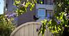 - (SNXZ) Tags: bird pajaro mirlo gusano comidapajaro jardin ave eating