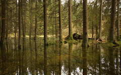 Reflection (Sran Vld) Tags: underwater water overfloating tree trees landscape forest muontains natuur nature reflection reflektie green explore national geographic