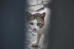 cat (Lyao_1) Tags: canon 650d eos animal taiwan nature cat sakura camellia chili puppy photo plant photography tree sky sun dogs daily world lens 55250mm flower green 2018