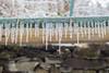march18-32 (holies) Tags: ice ghiaccio neve snow preli acquedotto acquedottostoricodigenova aqueduct