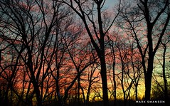 Colorful Evening Sky (mswan777) Tags: pattern yellow orange red 1855mm nikkor d5100 nikon landscape nature outdoor scenic michigan warm evening silhouette tree sunset cloud sky