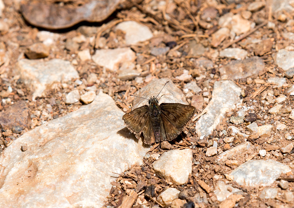 фото: Масленая муха