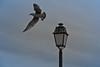 Lampe à air (franck_barske) Tags: candélabre ciel lampadaire goéland