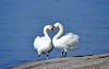 L'amour c'est...♥ (Diegojack) Tags: préverenges vaud suisse oiseaux couple cygnes amour parade coeur plage sable