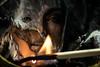 Split (phil1496) Tags: macromondays flame split