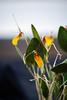 AOS 1.2018-2 (Jordan Cataldo) Tags: aos american orchid society st paul mn winter carnival
