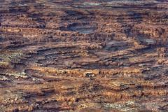 Needles (foto guy Terry) Tags: nikon canyonlandsnationalpark utah landscapes rockformations