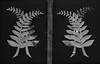Fern Motif, Percy Scenic Reserve (russellstreet) Tags: gate lowerhutt newzealand wellington fern wellingtonregion percyscenicreserve