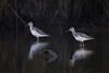 Signal To Noise (gseloff) Tags: greateryellowlegs bird wader animal wildlife nature water reflection distortion bayou horsepenbayou pasadena texas kayak gseloff