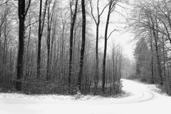 The Curve (Rosmarie Voegtli) Tags: snow curve trees forest dornach arlesheim morningwalk winter inexplore