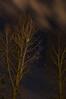 Fría noche de primavera (Josune2003) Tags: castrillo paisaje noche nocturna linterna