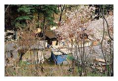 (Jordane Prestrot) Tags: jordaneprestrot film filmisnotdead analog argentique argéntico película coréedusud southkorea coreadelsur ♈ séoul seoul seúl bidonville slum chabola poverty misère pobreza tree arbre árbol