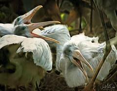 The Andrew SIsters (QuakerVille) Tags: jonmarkdavey 2018 wildlife wetland birds wakodahatchee greencay palmbeach pbc bird florida water waterway boyntonbeach fl usa