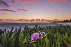 Santa Cruz Sunset (Justin Garofano) Tags: nikon d750 california sunset santacruz pacific ocean grouptripod