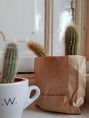 Friendly cactus (DrSnappy) Tags: plant cactus text white