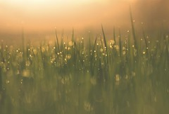 Awesome Earth (Awesome Earth) Tags: magic light sweet life dreams awesome earth bokeh sunset love grass
