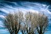 Blue (Salva Pagès) Tags: arbre árbol tree blau azul blue hivern invierno winter cel cielo sky cirrus clouds