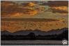 Utah Snow Geese 021818-8212-W.jpg (RobsWildlife.com © TheVestGuy.com) Tags: nature utah wild adventure robswildlifecom 021818 geese bird birds robdaugherty snowgeese naturelovers naturephotography explore birding