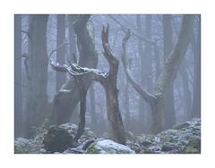Points (JRTurnerPhotography) Tags: fujifilm fujix fujixt2 fujinonxf50140mmf28 fujifilmx jaketurner jrturnerphotography picture print image photo photography photograph photographer mirrorless mirrorlesscamera longlens longlensphotography telephoto peakdistrict peakdistrictnationalpark nationalpark uk unitedkingdom gb greatbritain europe eu britain britishcountryside countryside woodland forest woods tree trees wood 2018 february landscapephotography landscape snow snowing snowy winter bolehill bolehillquarry quarry quarryscape padley padleygorge derbyshire chesterfield hathersage mist fog oak oaktrees oakforest