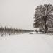 Lo Plataner monumental de Tornabous, nevat.