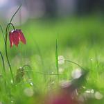 La fleur dans le matin thumbnail