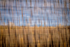 A Lake on The Other Side Of The Wattle Fence (GDJVJ) Tags: 50140mm lagodiporta telezoom xpro2 gdj giandomenicojardella giandomenicojardellacom birdwatching versilia montignoso