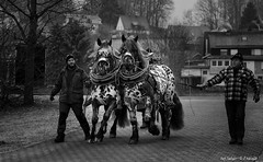 Horsepower (Only Snatches) Tags: bavaria bayern berching deutschland germany horse jahreszeit mood morgen natur neumarkt oberpfalz pferd rossmarketberching rossmarktberching tiere upperpalatinate winter animals bw cold kalt morning nature season sw