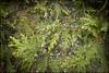 2013-09_DSC_5618_20171207 (Réal Filion) Tags: québec canada cristaux glace eau végétal cèdre thuya texture toile araignée nature environnement crystal ice water vegetable cedar thuja web spider environment quebec