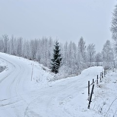 Crossroad (Stefano Rugolo) Tags: stefanorugolo pentax k5 pentaxk5 smcpentaxm50mmf17 crossroad winter road countryroad countryside landscape squarefomat one tree fence hälsingland sverige sweden snow sky forest