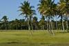 Verdes da Bahia (Márcia Valle) Tags: bahia caravelas brasil brazil márciavalle nikon d5100 summertime verão été brésil colors cores coresdobrasil palmeiras palmtrees nature natureza